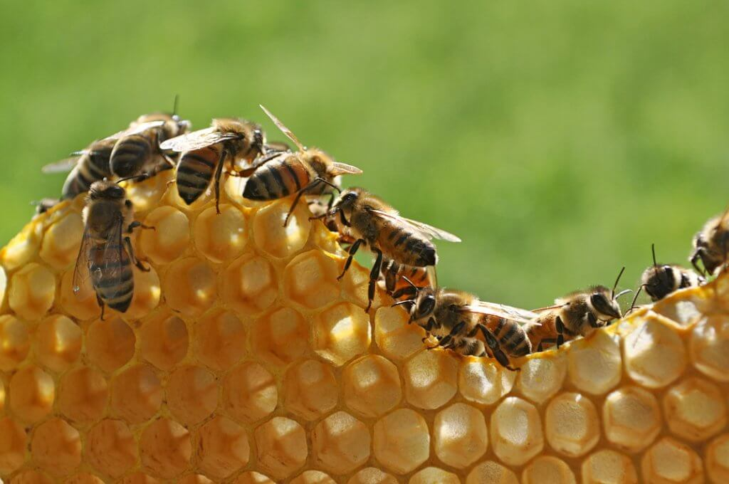 Building an Innovation Culture like the Bees
